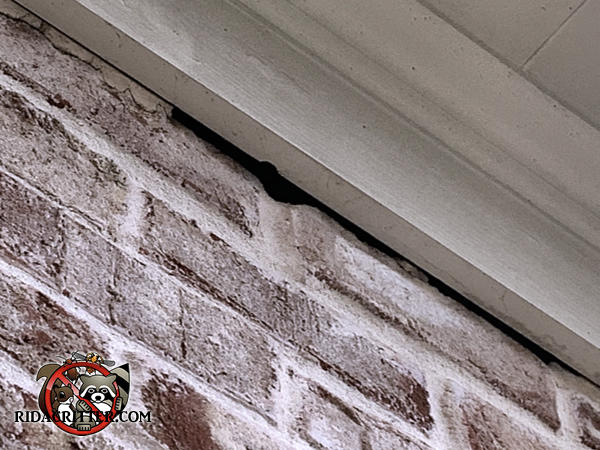 The caulking fell out from between the bricks and the wooden roof trim and created a gap the bats got through