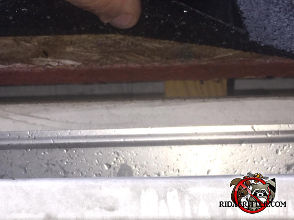 Bat entry gap of about three eighths of an inch between the roof sheathing and the fascia behind the rain gutter