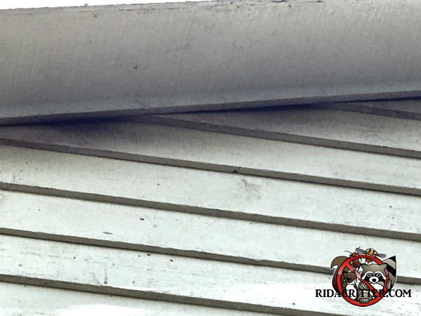 Stains on the siding under the sloped soffit from where bats were getting into and out of the attic of a house in Jonesboro Georgia