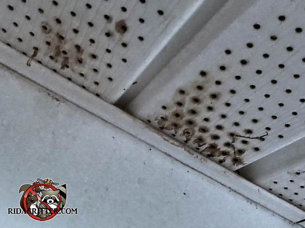 Bat guano dripping through the ventilation holes of a soffit panel on a house in Newnan Georgia