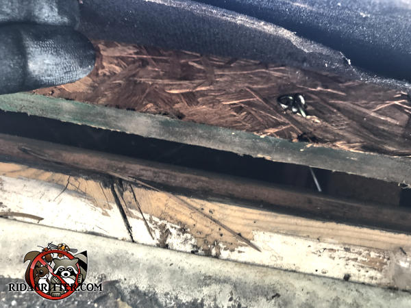 Three eighths inch gap between the roof sheathing and fascia that allowed bats into the attic of a house in Alpharetta Georgia