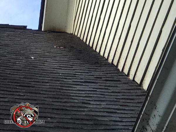 Stains around a gap between the soffit and shingles and bat guano on the shingles are evidence of bats that need to be removed from the attic of a house in Eatonton Georgia