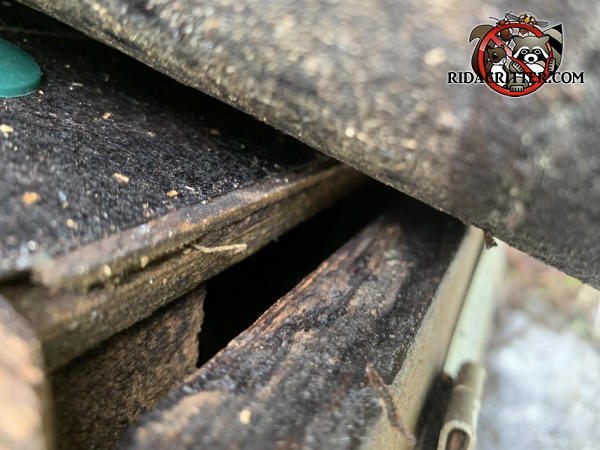Three eights inch gap between the roof sheathing and the stained fascia allowed bats to get into the attic of a house in Atlanta