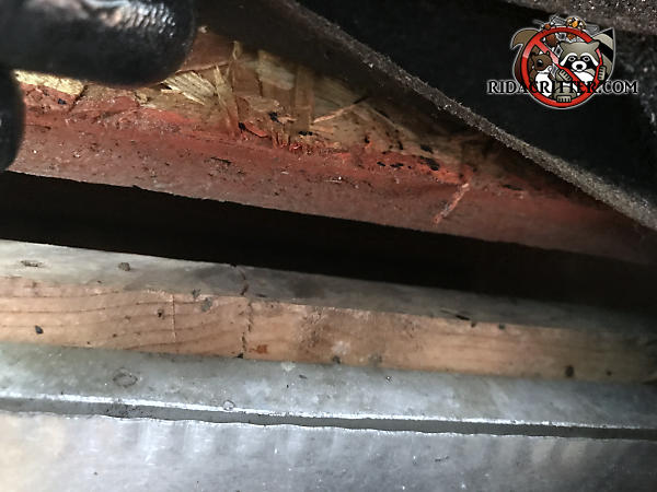 Half inch gap between the roof sheathing and the fascia behind the rain gutter that allowed bats into the attic of a house in Atlanta
