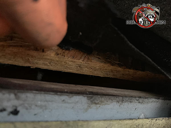 Three eighth inch gap between the roof sheathing and fascia needs to be closed to seal bats out of the attic of a Douglasville Georgia home.