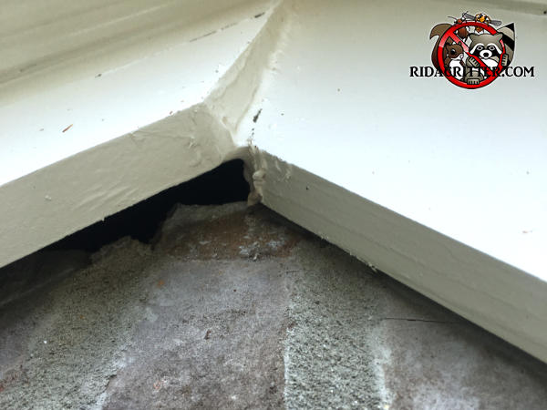 Three quarter inch gap behind one piece of wooden trim at the peak of the roof of a brick house in Berkeley Lake Georgia allowed bats to get into the attic