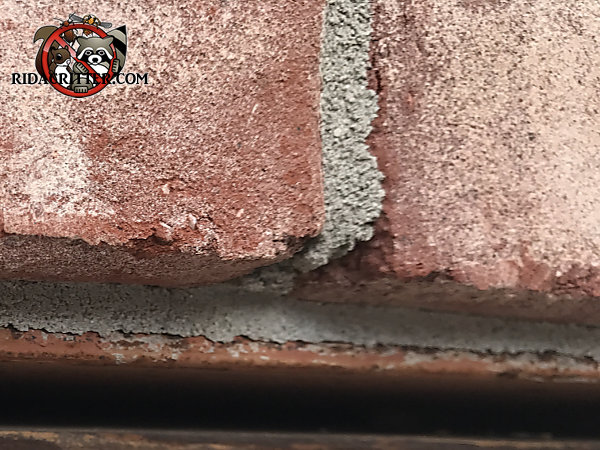 Three eighths inch gap between the window frame and the bricks allowed bats into a house in Braselton Georgia
