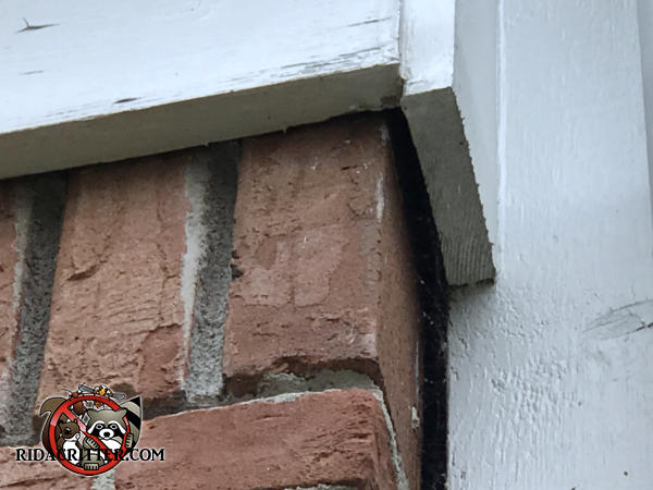 Gap of about three eighths of an inch between the bricks and the frieze board allowed bats into a house in Atlanta