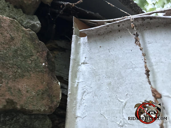 Gap formed by a brick with a rounded corner behind a rain gutter needs to be repaired to keep bats out of a house in Atlanta.
