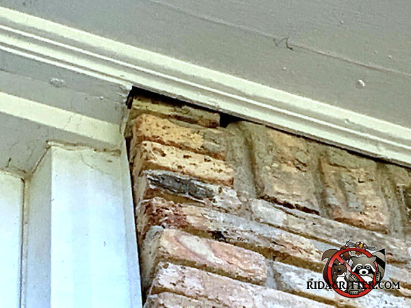 The top brick adjacent to the soffit has shifted which created a gap between the bricks and the soffit that bats used to get into the attic of a house in Atlanta
