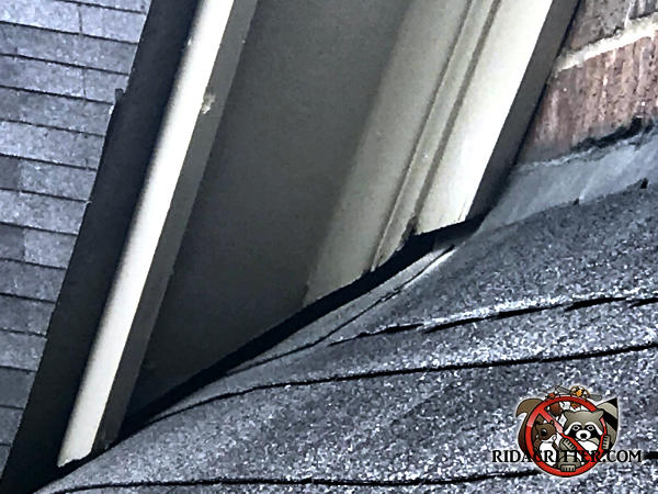 The roof of a house in Chattanooga is sagging and created a gap under the trim that bats used to get into the attic