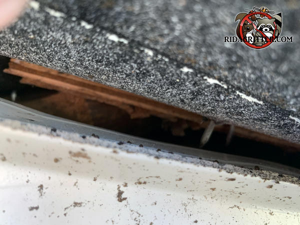 Half inch gap between the plywood roof sheathing and the drip edge needs to be sealed to keep bats out of the attic of a house in Decatur Georgia