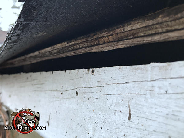 Five eighths inch gap under the roof sheathing along the entire perimeter of a house allowed bats into the attic of a house in Douglasville Georgia