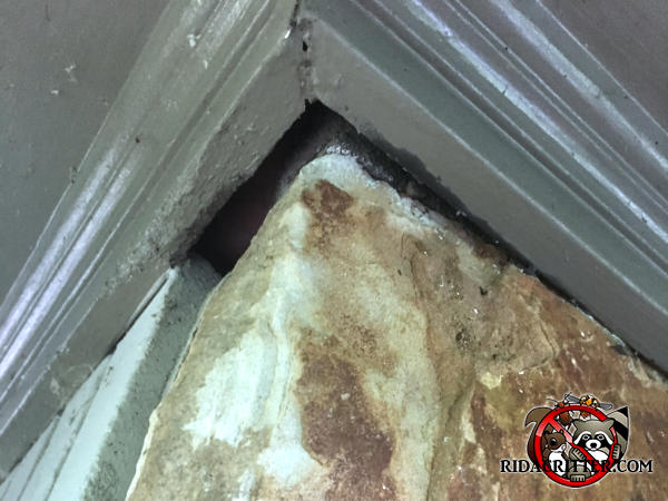 Tapered gap about half an inch at its widest point between the roof soffit trim and the stone wall allowed bats into the attic of a house in east Brainerd Tennessee