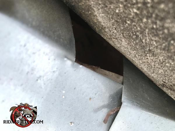 Lifted shingle reveals a roughly one inch gap between two adjacent sections of flashing that allowed bats to get into the attic of a house in Berkeley Lake Georgia