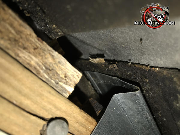 There are gaps in and under the metal roof flashing of a house in Dunwoody Georgia that allowed bats to get into the attic.