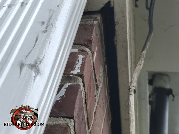 Three quarter inch gap between the frieze board and the bricks allowed bats to get into a house in Harrison Tennessee