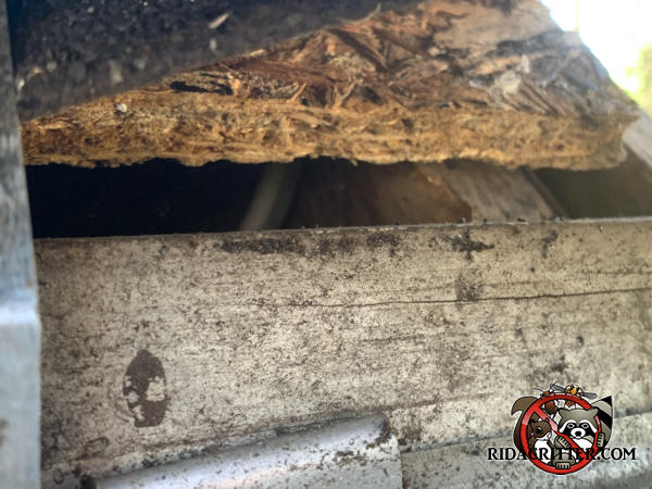 Half inch gap in the roof sheathing that allowed bats to get into the attic of a house in Marietta Georgia