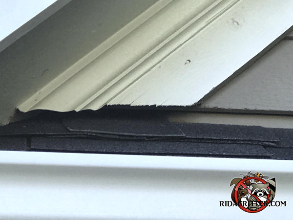 Gap of about an inch between the diagonal roof trim and the shingles on top of the soffit allowed bats into a Red Bank Tennessee home