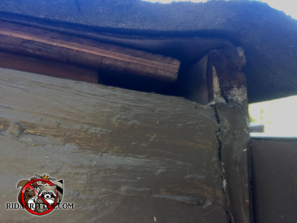 Half inch gap between the roof trim and the sheathing under the shingles needs to be sealed as part of an Atlanta bat removal job.