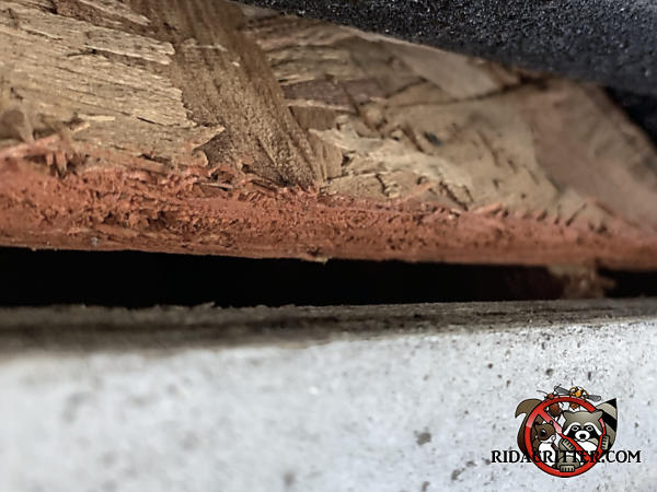 Quarter inch gap between the roof sheathing and fascia of a house in Roswell Georgia with bat rub marks on the top edge of the fascia