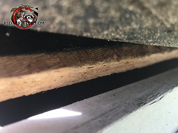 Three eighths gap between the roof sheathing and the fascia allowed bats to get into the attic of a house in Roswell Georgia