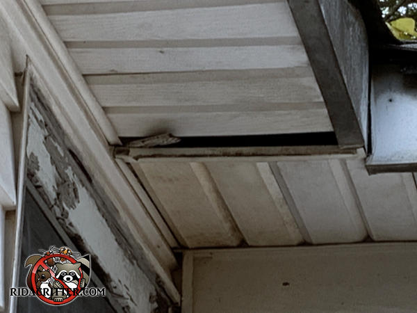 One section of soffit panel on a house in Suwanee Georgia is hanging down about an inch and bats got into the house through the gap