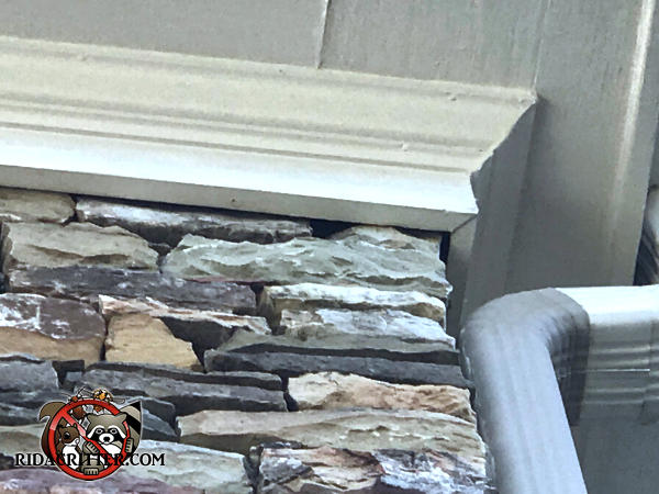 Gap between the stone wall and the frieze board allowed bats to get into the attic of a house in Alpharetta Georgia