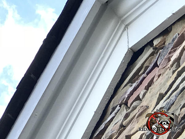 Gap between the roof trim and stones at the peak of the roof allowed bats into the attic of a house in Chattanooga Tennessee