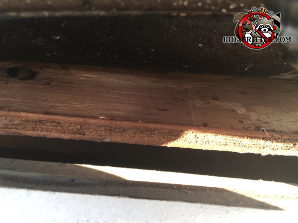 Half inch gap between the plywood roof sheathing and the wooden fascia allowed bats to get into the attic of a house in Taylorsville Georgia