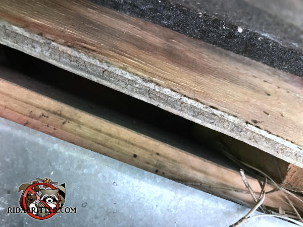 Half inch gap between the plywood roof sheathing and the wooden fascia behind the rain gutter allowed bats into an attic in Tucker Georgia