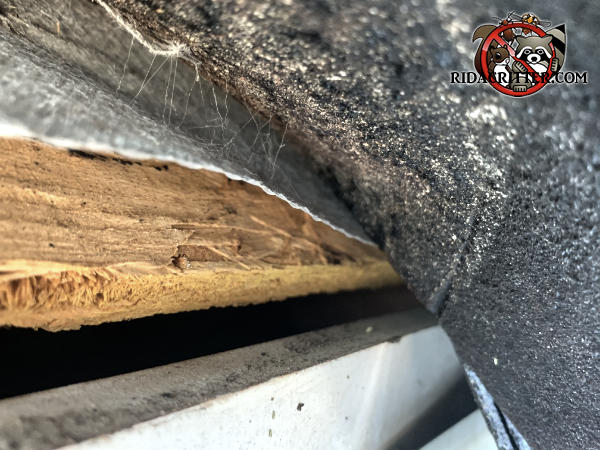 Three eighths inch gap between the plywood roof sheathing and the fascia that allowed bats to get into the attic of a house in Tyrone Georgia