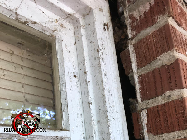 Roughly one inch irregular gap between the window frame and the exterior brick wall needs to be sealed to keep bats out of a house in East Brainerd Tennessee