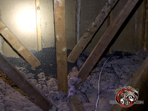 Pile of bat guano about a foot high by at least six feet wide against the wall in the unfinished attic of a house in Peachtree City Georgia