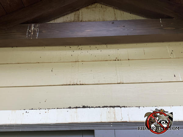 Bat guano and stains from the dripping coming from behind the exterior rafters of a house in Dawsonville Georgia