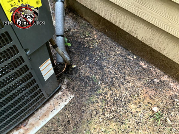 Bat guano on the ground near an air conditioning unit outside a house in Senoia Georgia from bats that were using the gable vent above to get into and out of the attic.