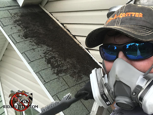 Male bat removal technician wearing a respirator and sunglasses standing on a ladder in front of a pile of bat guano on the shingles under the soffit of a house in Concord Georgia