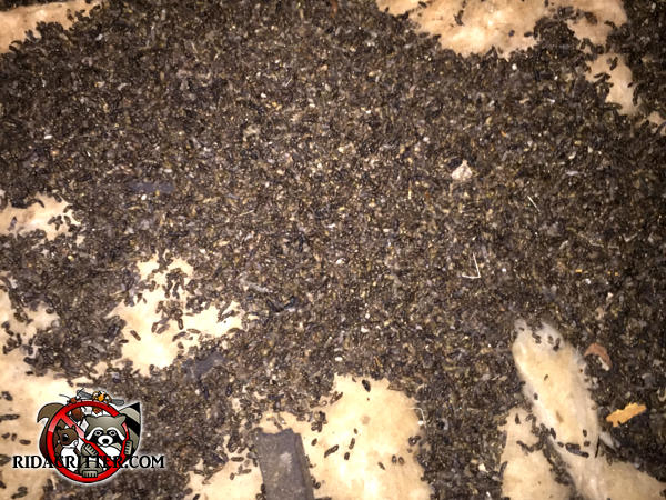 Pile of bat guano on the floor in the attic of a house in Atlanta Georgia