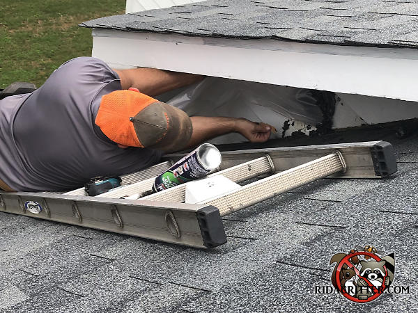 Man lying on a ladder that is flat on the roof of a house in Cumming Georgia removing a bat trap and sealing gaps to keep bats from getting into the attic