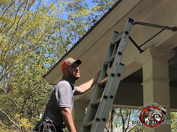 Man on a ladder examining the roof of a house in Warrior Alabama in preparation of sealing the roof to keep bats out of the attic