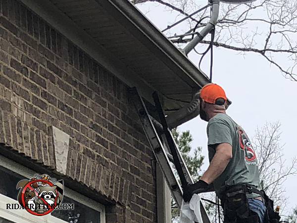 Man on a ladder sealing bats out of the attic of a house in Warrior Alabama