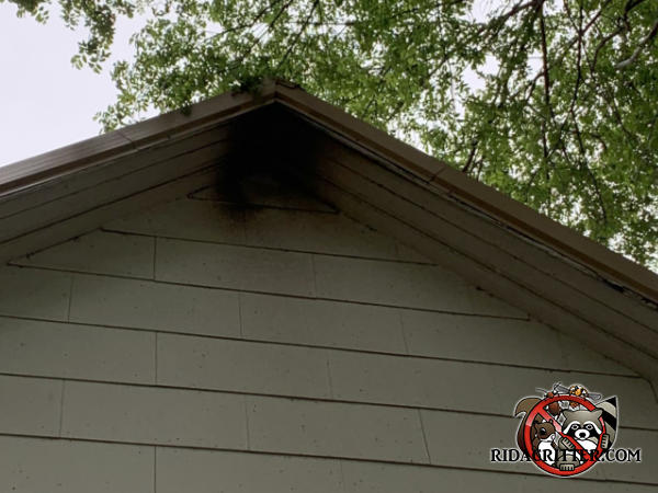 Two square foot patch of bat stains under the peak of the roof on the outside of a house in Cordele Georgia