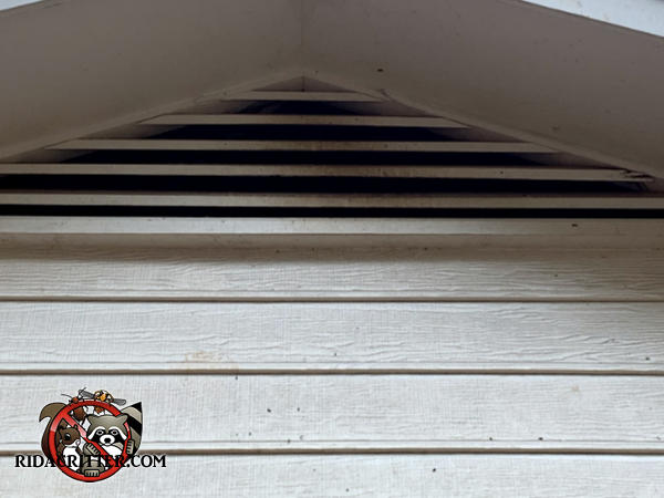 Bat stains on the slats of a gable vent right under the peak of the roof of a house in Peachtree City Georgia are evidence there are bats in the attic