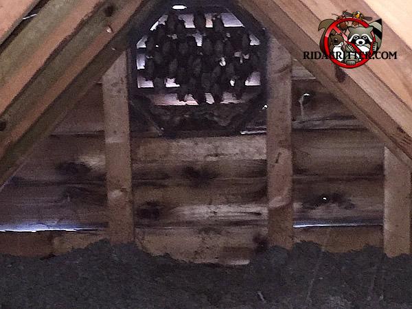 Bat Removal Birmingham Bessemer Hoover Hueytown Al