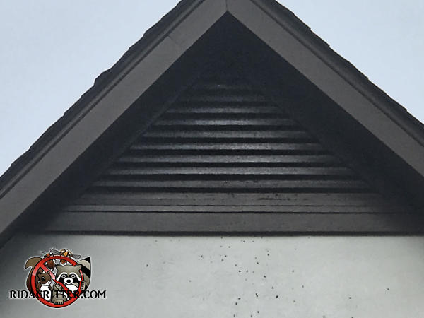 Bat stains on the gable vent slats and guano on the exterior wall under the gable vent are evidence of a bat problem in the attic of a Carrollton Georgia home