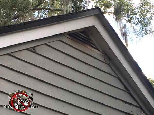 Bat Removal Macon Albany Valdosta Georgia