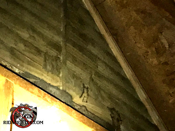 Bats on a gable vent screen in the attic of a house in Rome Georgia