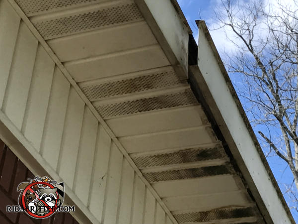 The fascia is detached from the soffit and there is bat guano dripping through the soffit vent panels at a house in College Park Georgia