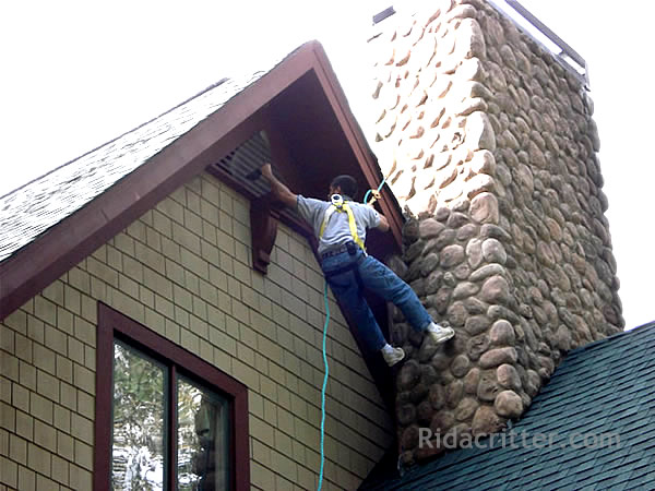 Man hanging from a roof in a harness doing bat control work