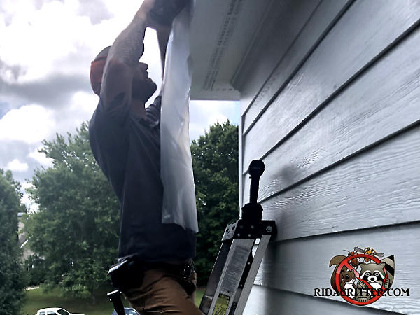 Man on a ladder installing a tubular thin plastic trap the resembles a long plastic bag on the soffit of a house in Atlanta to keep bats from getting back into the attic